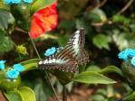 Motyl 9