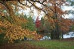 Ogród botaniczny jesienią
