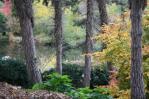 Ogród botaniczny jesienią 2