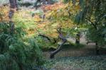 Ogród botaniczny jesienią 3