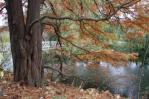 Ogród botaniczny jesienią 4