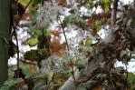 Ogród botaniczny jesienią 5